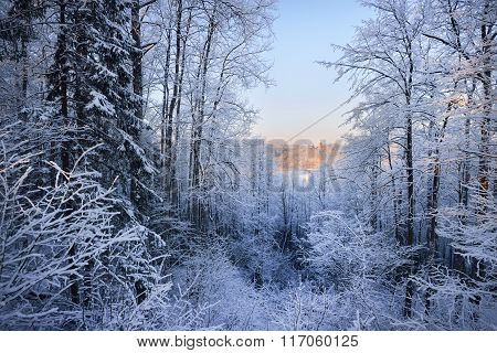 Distant View Of Turaida Castle In Latvia During Winter, Surrounded By White Snowy Forest