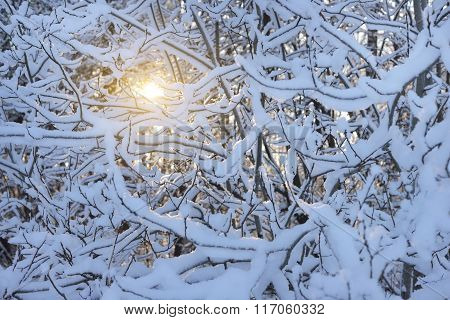 Snow Covered Thin Branches At A Bright Winter Sunset
