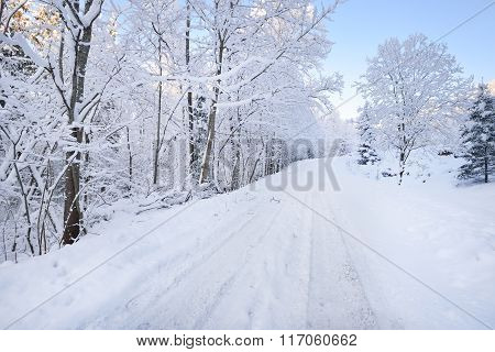 Rural Road Through A Winter Wonderland In A Mixed Forest