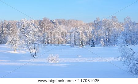 Winter Wonderland On A Clear Meadow With A Deciduous Forest