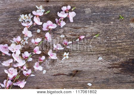 twigs with cherry flowers