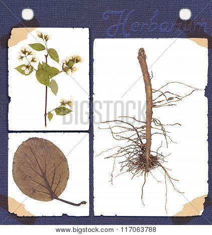 Herbarium Plant Details
