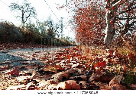 Autumn landscape,dry leaves on the ground