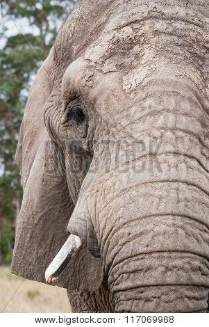 Close up of an elephant