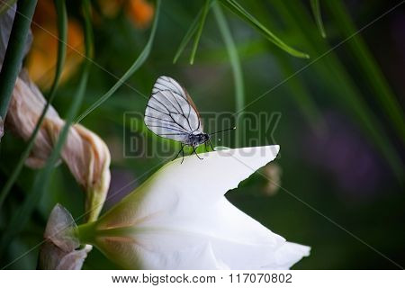 beautiful butterfly on a flower in the grass. Macro
