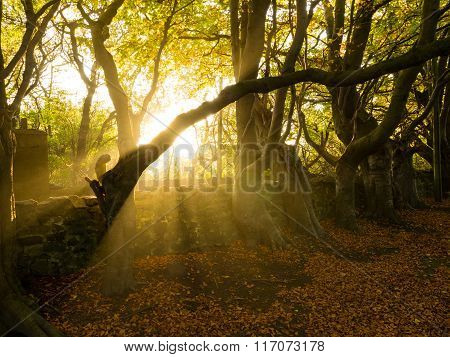 Autumn Landscape With Dramatic Lighting In Aberdeen, Scotland Uk