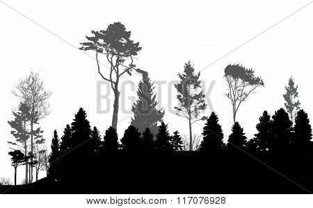 Image of Nature. Tree Silhouette. Eco banner. Vector Illustratio