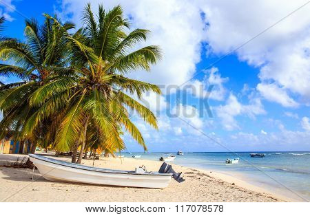 Caribbean Beach In Dominican Republic