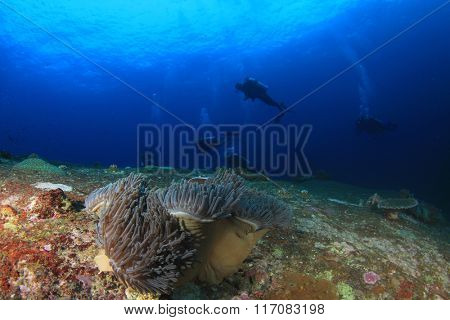 Scuba divers explore underwater coral reef sea ocean