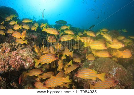 Coral reef fish sea ocean underwater