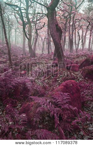 Beautiful Surreal Alternate Colored Forest Landscape