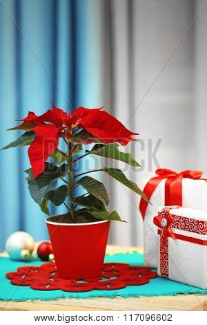 Christmas flower poinsettia on holiday interior