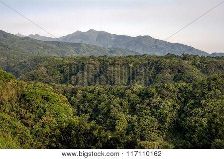 Green primeval forest