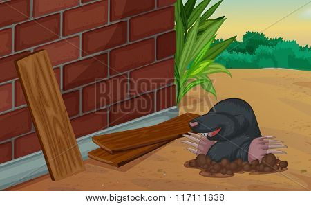 Groundhog coming out of the ground illustration