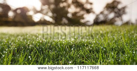 Closeup Of Green Grass With Blurred Trees