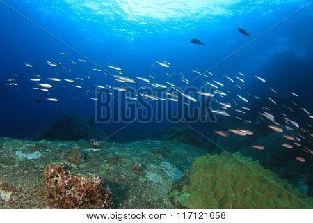 Underwater coral reef in ocean