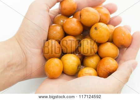 Fresh Jujube Fruit In The Hands