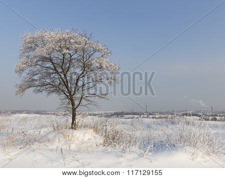 Winter In Moscow Region, Russia