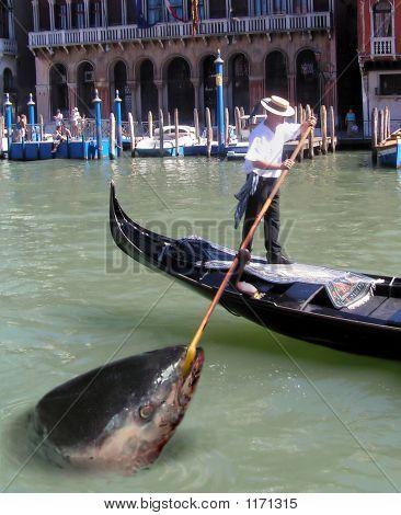 Venice Tuna