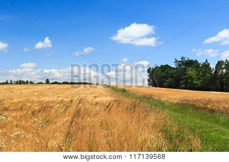 Hiking Path Next To Grain Field With Blue Sky In Saxon Switzerland