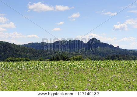 Group Of Rocks Schrammsteine And Falkenstein With Thistle Field And Blue Sky In Saxon Switzerland