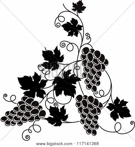 Grape Branch With Bunch Of Grapes And Leaves.