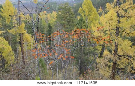 Top view of colorful autumn forest