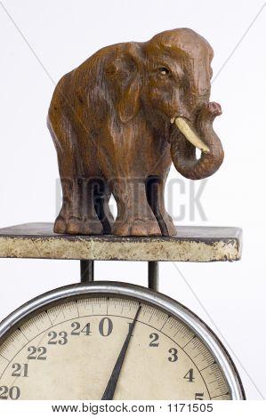 The One Pound Elephant