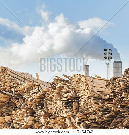 Log And Wood Piles In Industrial Timber Factory.