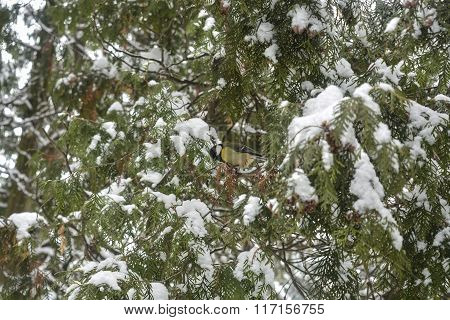 bird in a winter park