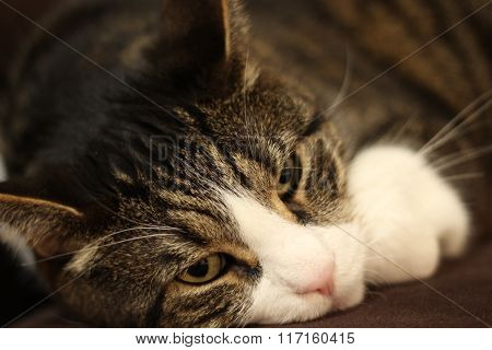 sleepy sweet cat