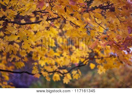 Autumn And Leaves