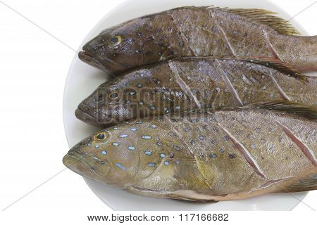Fresh Grouper Fish (leopard Grouper) On Dish For The Ingredient In Cooking.