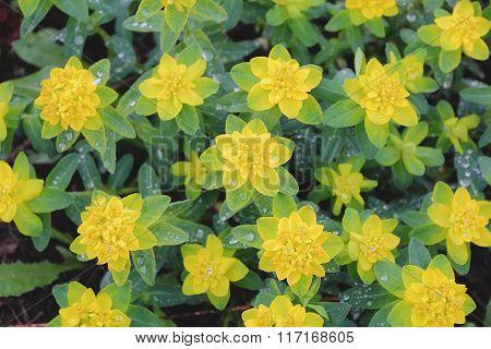Yellow Flower In Summer