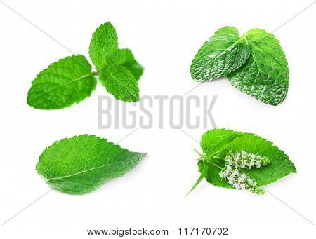 Collage with set of fresh mint, isolated on white