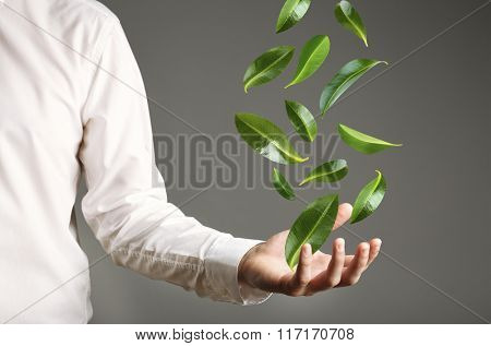 Green leaves falling into man hand, on grey background