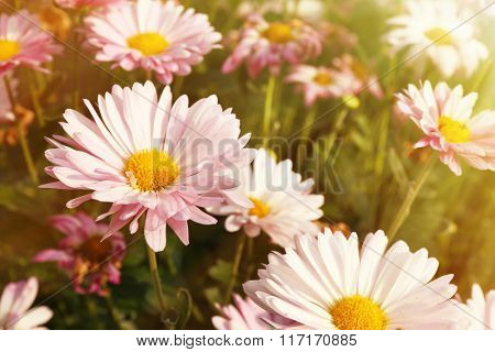 Beautiful flowers, close-up, outdoors