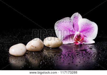 Pink orchid with  white zen stones and water drops on a black background