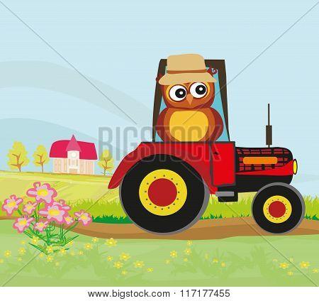 Owl Farmer