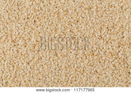 Closeup Of Lots Of Sesame Seeds