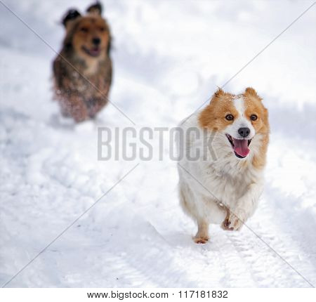 Dogs running in the white snow