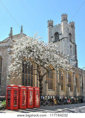 Street Of Cambridge With Four Telephone Boxes, A Blooming Tree, And A Church In Background