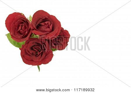 Red rosed