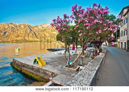 Quay with a blossoming tree in the sunlight. Montenegro