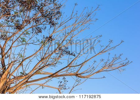 Stylize Abstract Branches On A Background Of The Sky