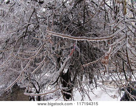 Ice Fairy Tale