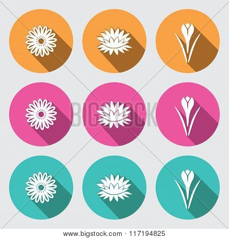 Flower icon set. Camomile, daisy, lily, water-lily, crocus, saffron. Floral symbol. White sign on ro