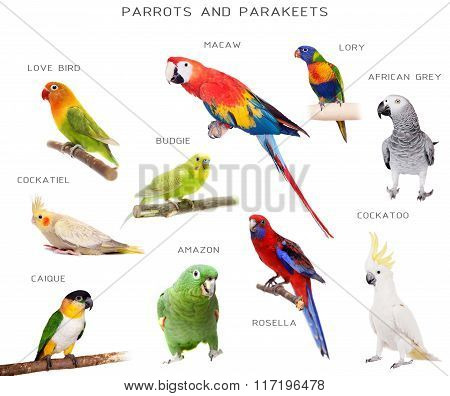 Parrots and parakeets education set