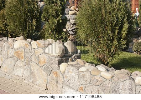 Evergreen Tree Among The Rocks