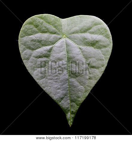 Fresh Green Leaves Isolated On White Background.